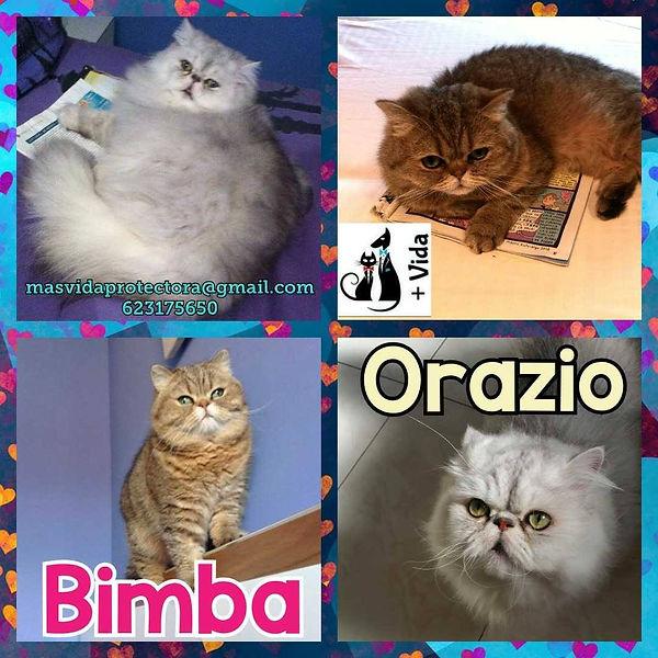 BIMBA Y ORAZIO.jpg