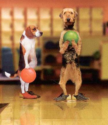 Doggone Bekins Bowlers