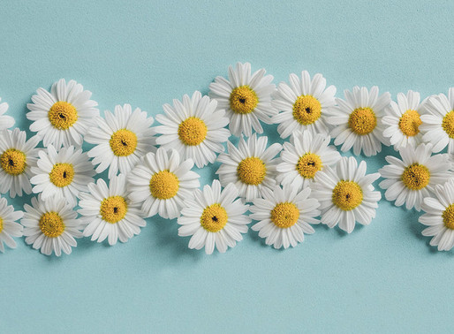 Chamomile - Nature's Remedy to Calm an Overactive Brain