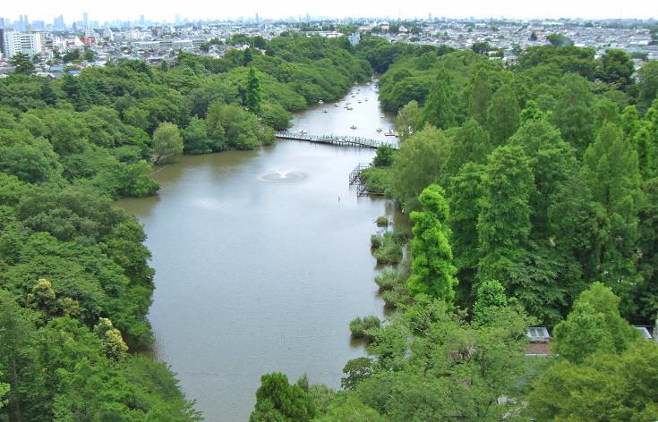石神井公園 井の頭公園