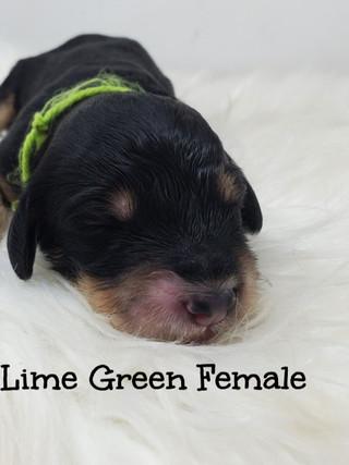 Lime green female edit elsa.jpg