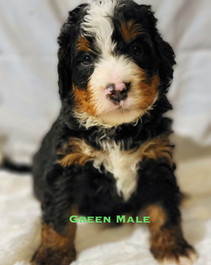 Green Male week 5 Bailey.jpg