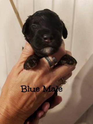 blue male edit.jpg