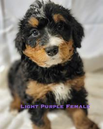 Light Purple Female.jpg