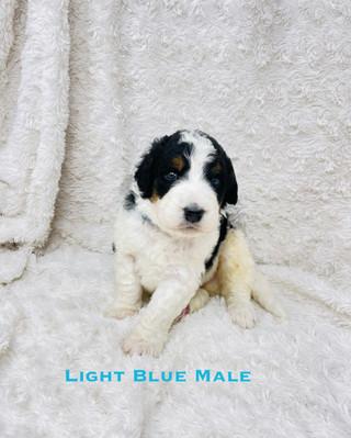 Light Blue Male.jpg