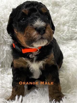 Orange Male week 3.jpg