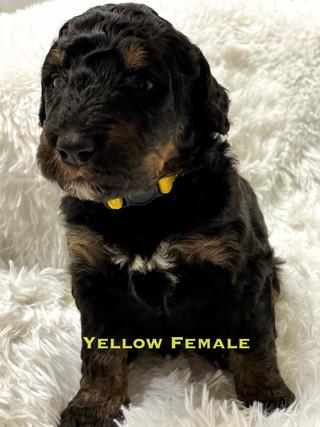 Yellow Female week 3.jpg