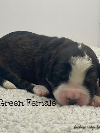 Belle green female.jpg