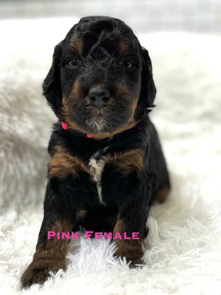 Pink Female week 3.jpg