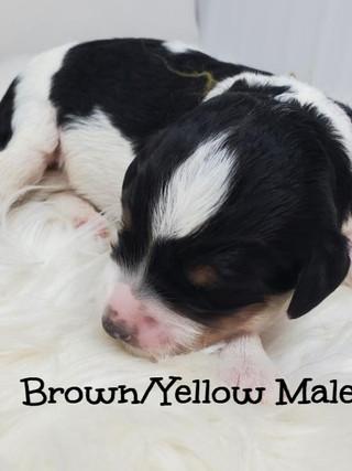 elsa brown yellow male edit.jpg