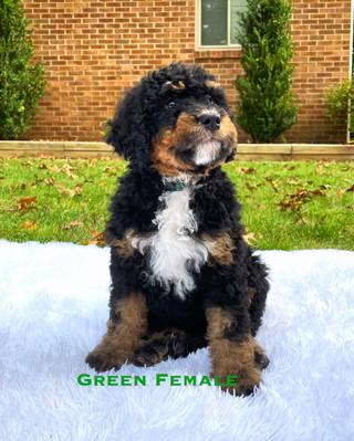 Green Female.jpg