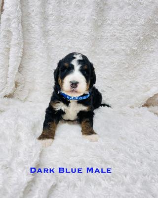 Dark Blue Male.jpg