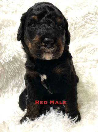 Red Male week three.jpg