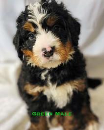Green Male.jpg