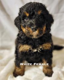 White Female week 5 Bailey.jpg