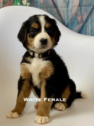 white female week six.jpg