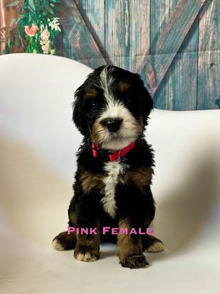 Pink female week six.jpg