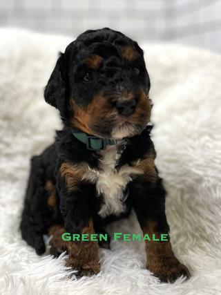 Green Female week 3.jpg