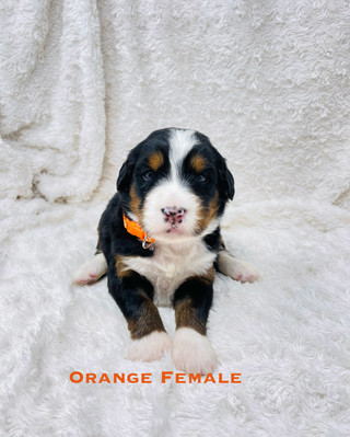 Orange Female.jpg