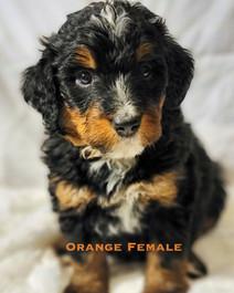 Orange Female week 5 Bailey.jpg