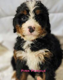 Pink Female.jpg