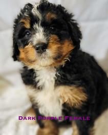 Dark Purple Female.jpg