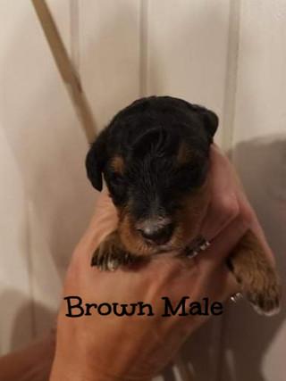 brown male edit.jpg