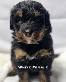 White Female.jpg