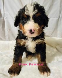 Pink Female week 5 Bailey.jpg