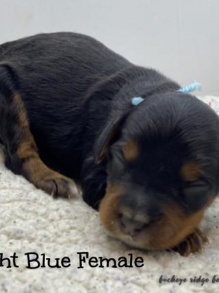 Belle light blue female.jpg