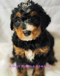 Light purple female week 5 Bailey.jpg