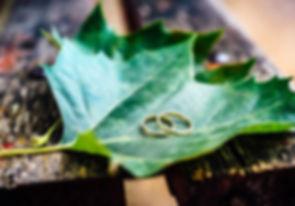 Studio 43 Photography, Close up, Wedding photography, Thessaloniki, Greece. Golden wedding bands, laying on a green leaf, during the next-day photo session. Κοντινό πλάνο από χρυσές βέρες γάμου, πάνω σε ένα φύλλο πλάτανου, κατά τη διάρκεια φωτογράφισης επόμενης ημέρας, στη Θεσσαλονίκη από το Studio 43 photography.