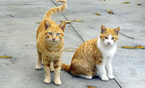 two-cats.jpg