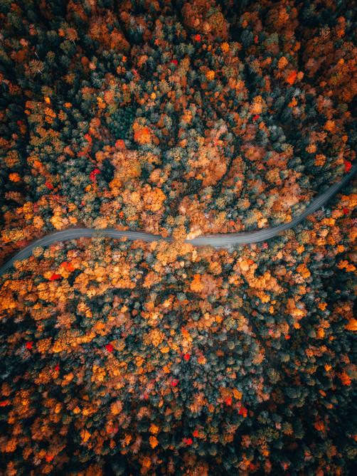 Fall Avenue