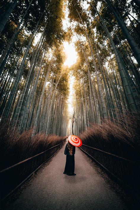 kyotoforestumbrella.JPG