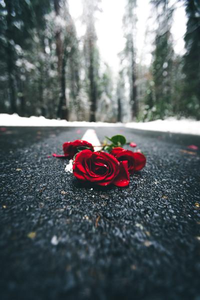 flowersroad.jpg