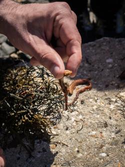sandwormsbeachcombing