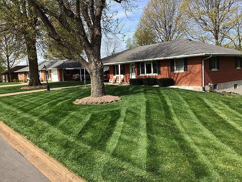grass4.jpg