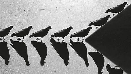 Le ombre di Alexey Bednij