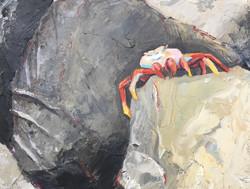 Oil Painting - Galapagos Crab