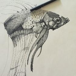 Stippling Betta Fish