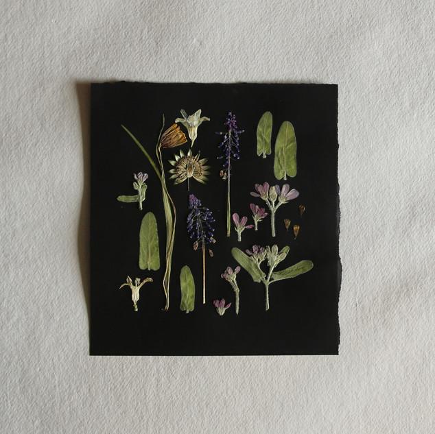 Oxypetalum, astrantia, mascari and hyacinth petals