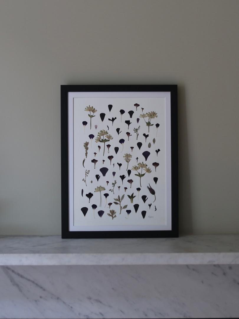 Black ranunculus, astranita and scabious petals