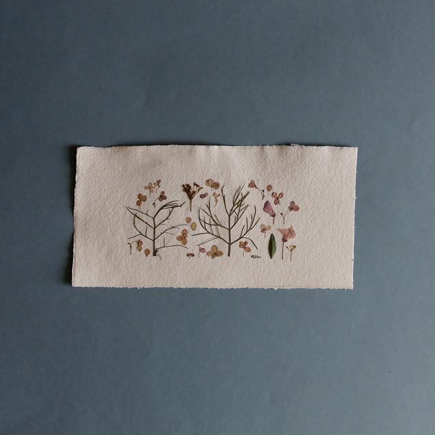 Nigella, Paniculata Hydrangea and Wild Sweet Pea