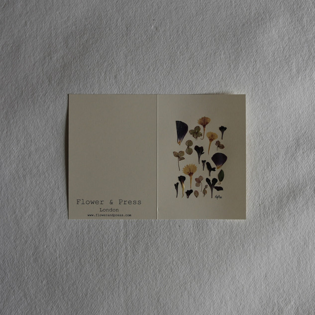 Hydrangea petals, scabious, ranunculus and sweet william petals