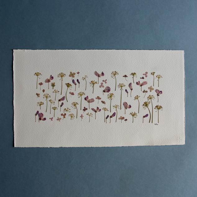 Wild Sweet Peas, Dill and Paniculata Hydrangea Petals