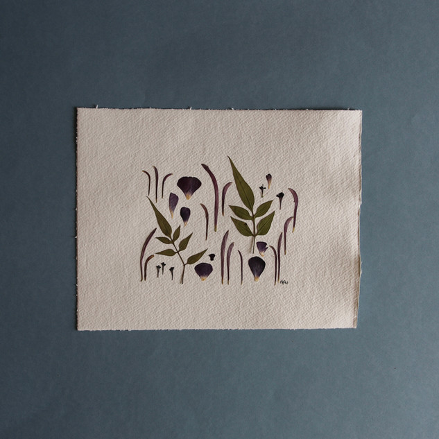 Jasmine, Ranunculus and Chrysanthemum Petal