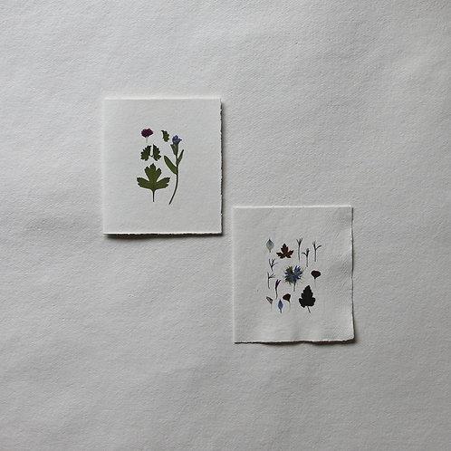 Medium Pressed Flower cards (14.8 x 10.5cm)