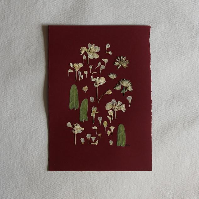 Oxypetalum, stock flowers and astrantia