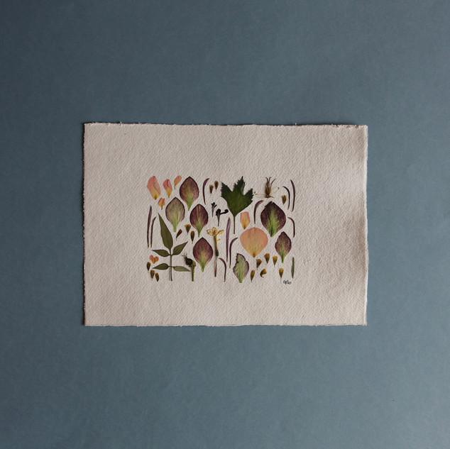 Hellebore, Rose, Jasmine Petals
